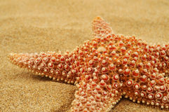 Starfish on the sand of a beach. Closeup of a starfish on the sand of a beach Royalty Free Stock Photo