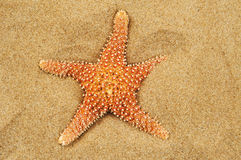 Starfish on the sand of a beach Stock Photography