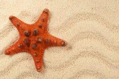 Starfish on sand. Beach holidays, seashells , starfish on white sand Royalty Free Stock Images