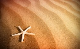 A beach image with a starfish Stock Images