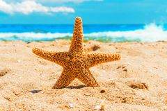 Starfish in the sand at the beach Royalty Free Stock Photos