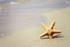 Starfish, sand, beach, sea. Summer holiday background Stock Image