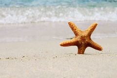 Starfish, sand, beach, sea. Summer holiday background Stock Photos