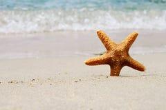 Starfish, sand, beach, sea. Summer holiday background Stock Photos