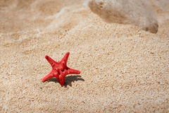 Starfish on a sand beach Stock Photography