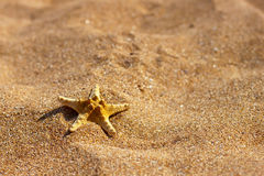 Starfish on the sand Royalty Free Stock Photo