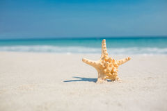 Starfish in the sand on the beach Royalty Free Stock Photo
