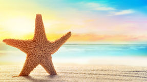 Starfish in sand on the beach Stock Images
