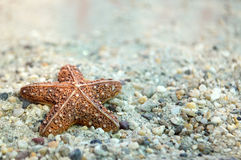 Starfish on the sand Royalty Free Stock Images