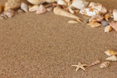 Starfish sand conch copy space Stock Photography