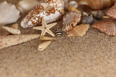 Starfish sand conch shells clam Royalty Free Stock Photography