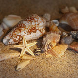 Starfish sand conch shells square Stock Photos