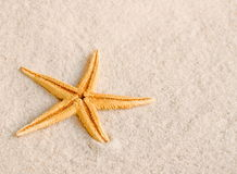 Starfish on sand Stock Images