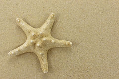 Starfish on sand Stock Photos