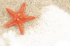 Starfish on a sand Royalty Free Stock Photo