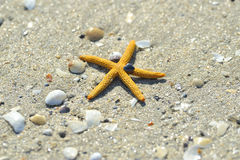 Starfish on sand Stock Photography