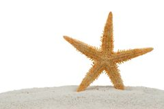 Starfish on sand isolated on white. Starfish on sand isolated on a white background stock image