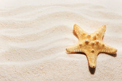 Starfish on sand with marks of waves. Summer beach background Stock Photos