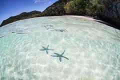 Starfish on Sand Royalty Free Stock Image