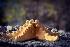 Starfish on sand at the seashore Royalty Free Stock Photos