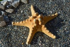 Starfish on sand at the seashore Royalty Free Stock Photography