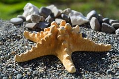 Starfish on sand at the seashore Royalty Free Stock Photo