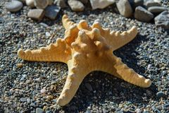 Starfish on sand at the seashore Stock Photography