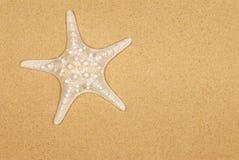 Starfish on beach sand background, copy space Stock Photo