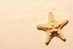 Starfish on sand. Summer beach background Stock Photos