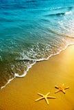 Starfish, Sand und Welle stockfotos