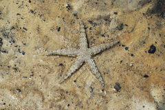 A starfish on a sand under the sea waves. Royalty Free Stock Images