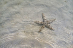 A starfish on a sand under the sea waves. Royalty Free Stock Photos