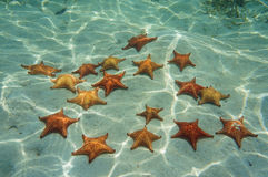 Starfish on sand underwater Stock Photo