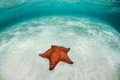 Starfish and Sand Royalty Free Stock Photos