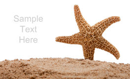 A starfish in sand on white with copy space Royalty Free Stock Photography