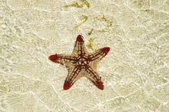 Starfish on the sandbank Stock Photo