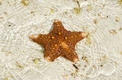 Starfish on the sandbank Stock Photography