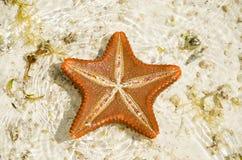 Starfish on the sandbank royalty free stock photo