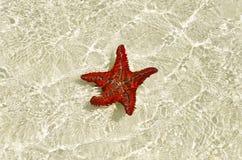 Starfish on the sandbank Stock Images