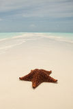 Starfish on a sandbar royalty free stock image