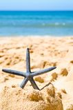 Starfish In Sandcastle Royalty Free Stock Photo