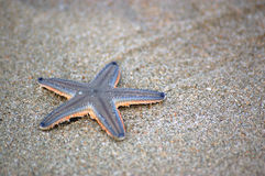 Starfish on sandy beach Stock Photos