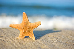Starfish on a sandy beach Royalty Free Stock Photo