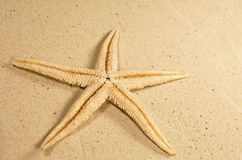 Starfish on a sandy beach Royalty Free Stock Images