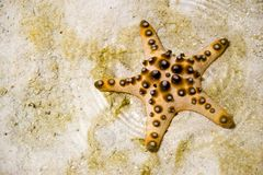 Starfish on sandy beach Royalty Free Stock Photo