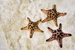 Starfish on sandy beach Royalty Free Stock Image