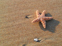 Starfish on Sandy Beach. Starfish on richly textured sandy beach Stock Image