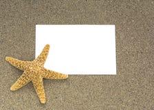 Starfish on a sandy on a beach Royalty Free Stock Photos