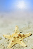 Starfish on sandy beach, bright sunshine Stock Photos