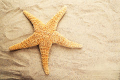 Starfish on sandy beach, close up Royalty Free Stock Photo